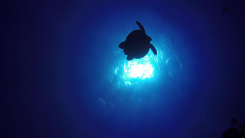 tortuga en el azul